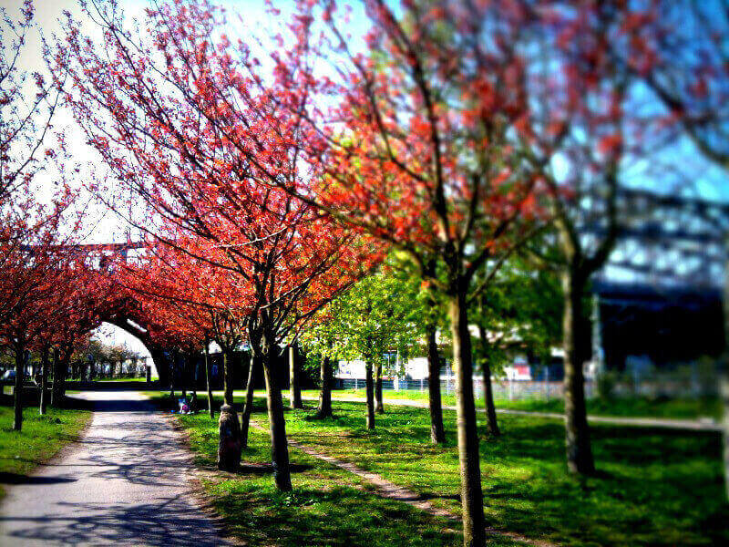 Mauerpark Berlin